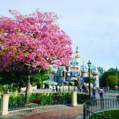Disneyland is in full bloom!  #disneyland #flowers #castle #spring #bloom #sleelingbeautycastle by tsumtsum.twins