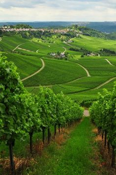 Keep your green footprint and enjoy our heritages.  Stuttgart's winning wine tradition , Germany