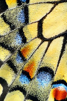 Butterfly ~ macro photography by Martin Amm Patterns In Nature, Textures Patterns, Fotografia Macro, Mundo Animal, Wassily Kandinsky, Butterfly Wings, Bird Wings, Blue Butterfly, Mellow Yellow
