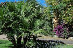 Bordighera (IM), Giardini dell'ex Chiesa Anglicana