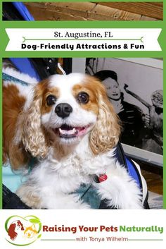 Traveling with Dogs in St. Dog-Friendly Guide to St. Augustine, Florida with bonus travel video. Positive Dog Training, Dog Travel, Travel Usa, Family Travel, Dog Care, Doge, Dog Friends, Dog Owners, Best Dogs
