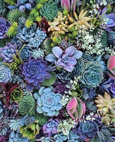 """Happy Thanksgiving!  I mean, does it get any better? #leafandclay #succulents (: @succulent_wonderland)"""