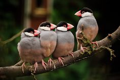 a charm of finches - both the conformist and non-conformist pose...