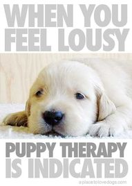 Puppy therapy!