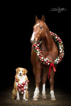 Christmas Horses, Christmas Animals, Christmas Dog, Horse Pictures, Animal Pictures, Cute Pictures, Beautiful Horses, Animals Beautiful, Cute Animals