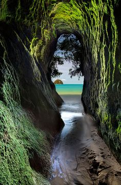 "travelgurus: "" Abel Tasman National Park in New Zealand by Darren Patterson Misted mountains and emerald fjords, ancient fern-ridden forests and cascading waterfalls, miles of empty black and white..."