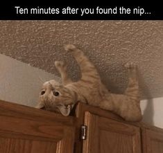 Fresh Animal Memes, Fresh From The Internet Oven - World's largest collection of cat memes and other animals Cute Cat Memes, Funny Animal Memes, Funny Animal Pictures, Cute Funny Animals, Funny Cute, Cute Cats, Funny Memes, Hilarious Pictures, Funniest Pictures