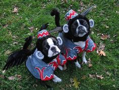 Wizard of Oz flying monkeys.  22 Funny Dog Costumes for Halloween via Brit + Co.