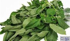 فوائد مذهلة لتناول طبق الملوخية: الملوخية من الخضراوات الورقية المفيدة للصحة ، حيث تعتبر مصدرا جيدا للألياف الغذائية وتحتوى على فيتامين…