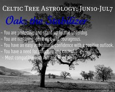 Celtic tree astrology oak
