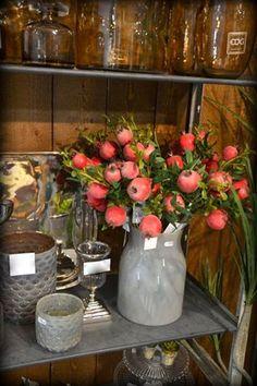 melograni in vaso, pomegranates  in pot