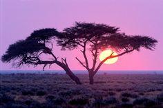 Etosha National Park, Namibia   Etosha National Park...