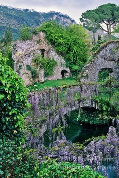 Wisteria covers an ancient stone bridge at the Ninfa gardens a few miles south of Rome. Photo Charles Mann
