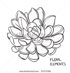 Single Flower Coloring Pages Lovely Succulents Vector Flowers Leaves Black and W. Single Flower Co Succulents Drawing, Cactus Drawing, Floral Drawing, Floral Illustrations, Botanical Illustration, Succulent Tattoo, Botanical Line Drawing, Doodle Art Journals, Flower Coloring Pages