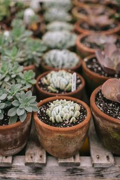 Amazing greenhouse inspiration (makes me want to put absolutely everything in terracotta pots!)