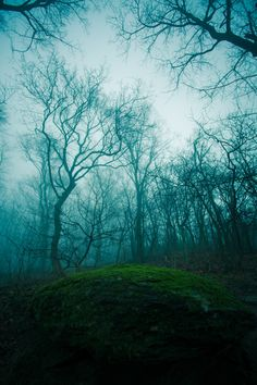 Forest in the mist.