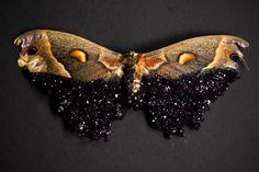 """Amethyst"" Moth · Tyler Thrasher · Online Store Powered by Storenvy"