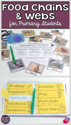 Teaching about food chains and food webs? This is full of hands-on activities to do with your students! My graders really understood the related vocabulary after using this! Science Resources, Science Lessons, Life Science, Weird Science, Science Ideas, Teaching Resources, Teaching Ideas, Food Chain Activities, Hands On Activities