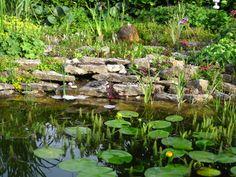 Gartenteich auf zwei Ebenen #unsertraumingruen#Gartenteich#Gartengestaltung