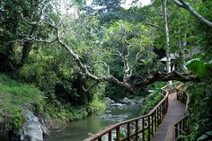 Bali - Maya Ubud Resort & Spa