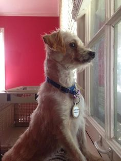 Time For Poodles And Friends: Tuesday Tails-Jake and The Rescue Project