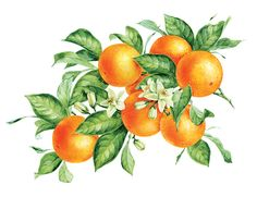 Olive, Cherry, Orange