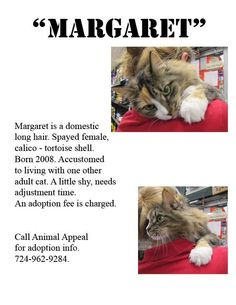 Margaret, spayed female calico-tortoiseshell.  Born 2008.  Accustomed to living with one other adult.  A little shy, needs adjustment time. Adoption fee of $95  includes spay/neuter, vaccinations, feline leukemia/aids testing & deworming. Please...