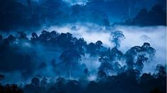 A tenth of the world's wilderness has vanished in the past two decades, research shows.