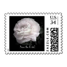 "Save the Date Pale Pink Rose Postcard Stamp - This photograph of a single ultra pale pink rose on a black background is a simple yet elegant postage stamp for invitations for postcard ""Save the Date"" announcements. This stamp is for postcards, but can be changed to other denominations.  Matching postcards available at www.zazzle.com/SocolikCardShop*. Original photograph by Alan Socolik. All Rights Reserved © 2013 Alan & Marcia Socolik #SaveTheDate"