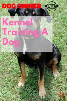 Want Wonderful Ideas About Pets? Seem Here ** Check out the image by visiting the link. Kennel Training A Dog, Crate Training, Dog Training Tips, Stress And Anxiety, Dog Owners, Crates, Stuff To Do, Have Fun, Puppies