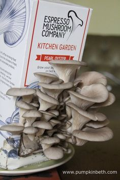The Espresso Mushroom Company's Kitchen Garden Pearl Oyster kit complete with pearl oyster mushrooms. Pearl Oyster, Growing Mushrooms, Edible Garden, Fast Growing, Types Of Food, Rainy Days, Oysters, Container Gardening, Homesteading