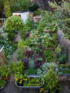 edible garden This beautiful kitchen garden is in Anna Greenlands urban Oxford patch and is a tasty extension of her spice cabinet. From Tagetes Cinnabar (African marigold) to Cucurbita moschata Tromboncino (squash). For more, head to our feature. Plan Potager, Potager Garden, Veg Garden, Vegetable Garden Design, Garden Cottage, Edible Garden, Garden Beds, Garden Landscaping, Vegetable Gardening