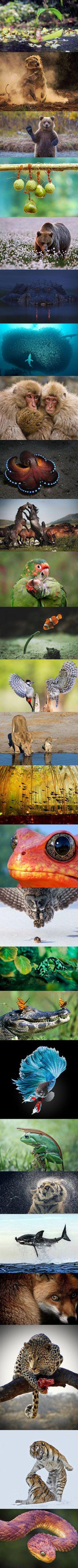 Algunas de las mejores fotografías de la naturaleza