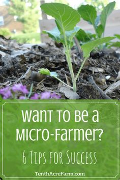 to be a Micro-Farmer? 6 Tips for Success Want to Be a Micro-Farmer? 6 Tips for SuccessWant to Be a Micro-Farmer? 6 Tips for Success Hydroponic Farming, Hydroponic Growing, Aquaponics Diy, Aquaponics System, Grand Popo, Organic Gardening, Gardening Tips, Indoor Gardening, Vegetable Gardening