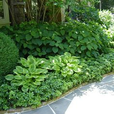 great use of boxwood, groundcover, hosta, hydrangea