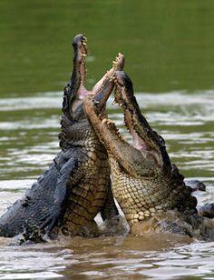 Alligator Park #Super8Natchitoches #Super8 #Natchitoches #travel