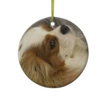 Cavalier Cocker Spaniel Ornament by DogPoundGifts