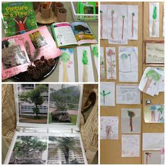 Trees - Transforming our Learning Environment into a Space of Possibilities: Inquiry Spaces