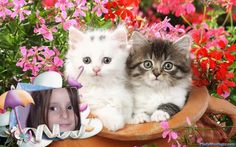 Cute cats breeds - Cute cats and kittens funny videos 2018 - Cute Kittens Videos Beautiful Kittens, Cute Cats And Kittens, Kittens Cutest, Kittens Meowing, Fluffy Kittens, Baby Cats, Kitty Cats, Animals Beautiful, Beautiful Things