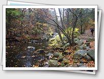 Pine Meadows Trail, Harriman State Park, NJ/NY