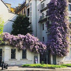Ogni anno dà sempre grandi soddisfazioni! Chi riconosce il luogo? Foto di Naty  #milanodavedere Milano da Vedere