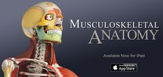 Great News! Our New Musculoskeletal Anatomy App Is Now Available for iPad   #Musculoskeletal https://itunes.apple.com/us/app/musculoskeletal-anatomy/id838849800?mt=8
