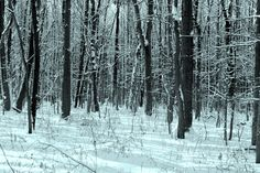 Snowy and serene morning - Charleston, New York (by Sean Sweeney)