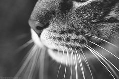 sweet kitty whiskers