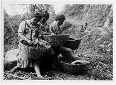 Cora women processing coffee beans in Nayarit - circa 1930