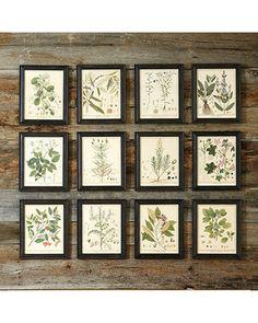 Heines Botanical Framed Art