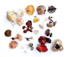 superior-forest-mushrooms mary jo hoffman :: still