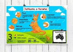 Kangaroos can rotate their ears 180 Degrees. They are marsupials.Know more with this poster   #Kangaroo #Marsupials #Animal posters # Charts # Animas #Education #ekdali #ekdali # education #posters # charts # kids