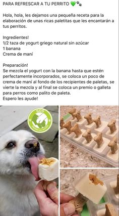 Animals And Pets, Baby Animals, Cute Animals, Puppy Food, Dog Snacks, Baby Dogs, Pet Shop, Pet Care, Dog Food Recipes