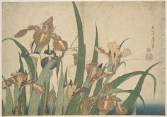 Katsushika Hokusai: Irises and Grasshopper, from an untitled series known as Large Flowers - Museum of Fine Arts